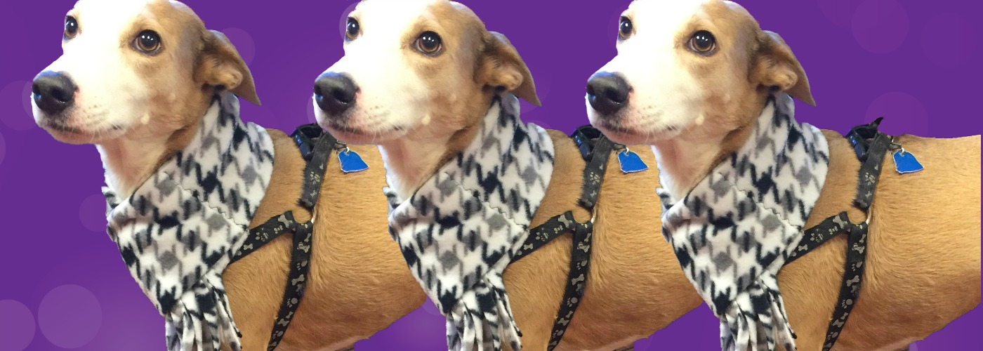 Gramercy Bark by Woodlawn Animal Hospital