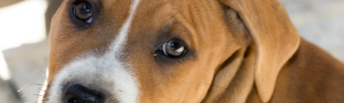 Pain in Your Pets: How to See It, How to Fix It