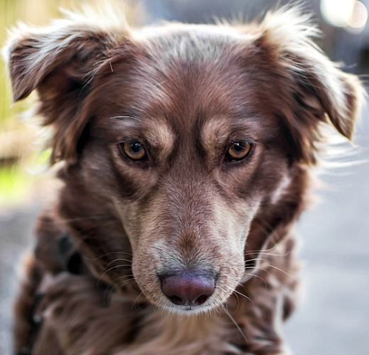 Pain care for dogs at Woodlawn Animal Hospital