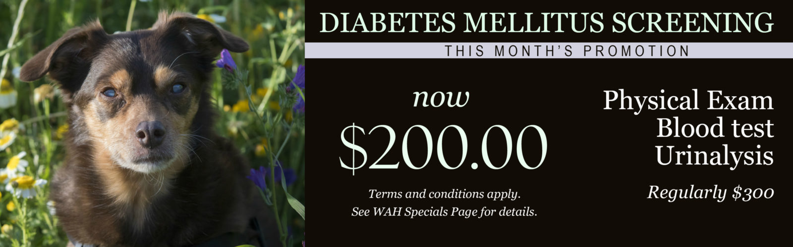Special Promotion for Diabetes Mellitus Screening at Woodlawn Animal Hospital